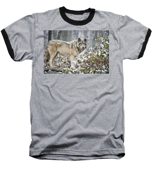 Timber Wolf Baseball T-Shirt