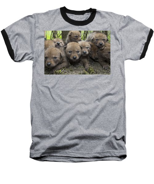 4 Week Old Wild Coyote Pups In Chicago Baseball T-Shirt