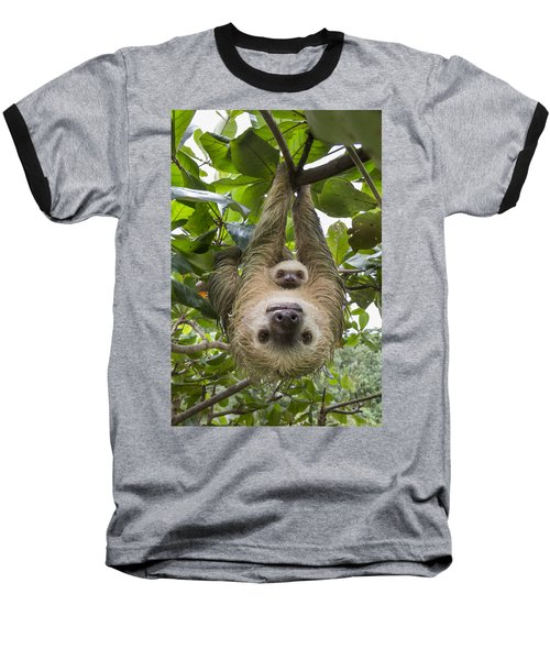 Hoffmanns Two-toed Sloth And Old Baby Baseball T-Shirt
