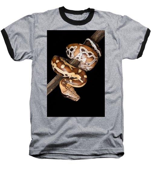 Blood Python Python Brongersmai Baseball T-Shirt by David Kenny