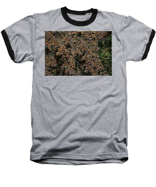 Monarch Butterflies Baseball T-Shirt by Carol Ailles