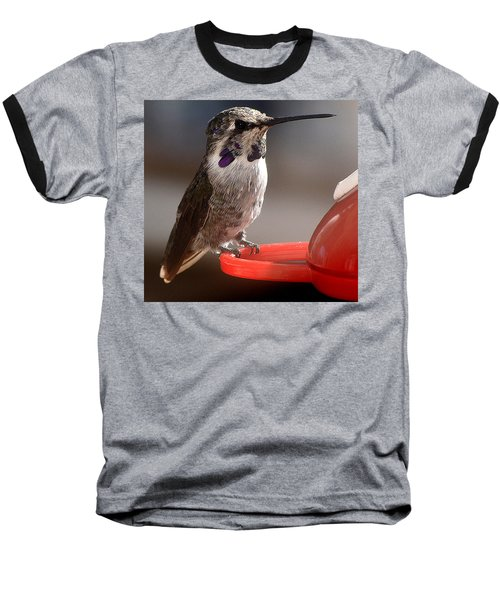 Baseball T-Shirt featuring the photograph Female Anna's Sitting On Perch by Jay Milo