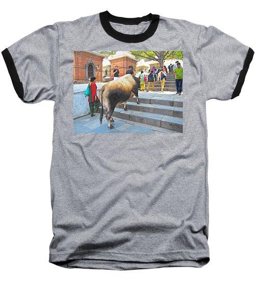 A Holy Cow Climbing Steps From Bagmati River In Kathmandu-nepal  Baseball T-Shirt