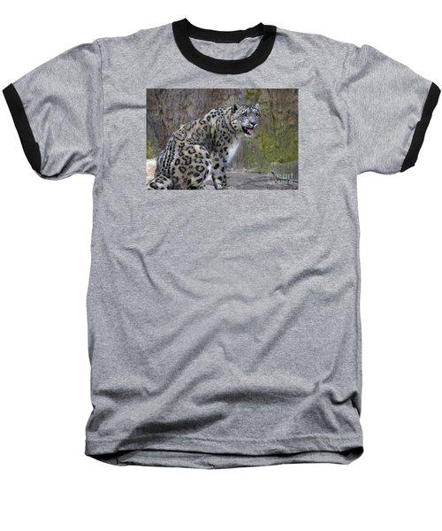 A Snow Leopards Tongue Baseball T-Shirt by David Millenheft
