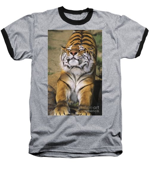 A Tough Day Siberian Tiger Endangered Species Wildlife Rescue Baseball T-Shirt by Dave Welling