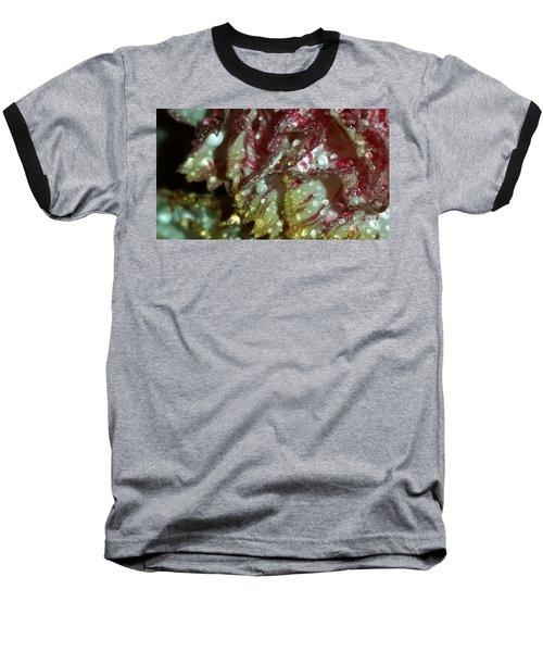 Abstract Carnation Baseball T-Shirt