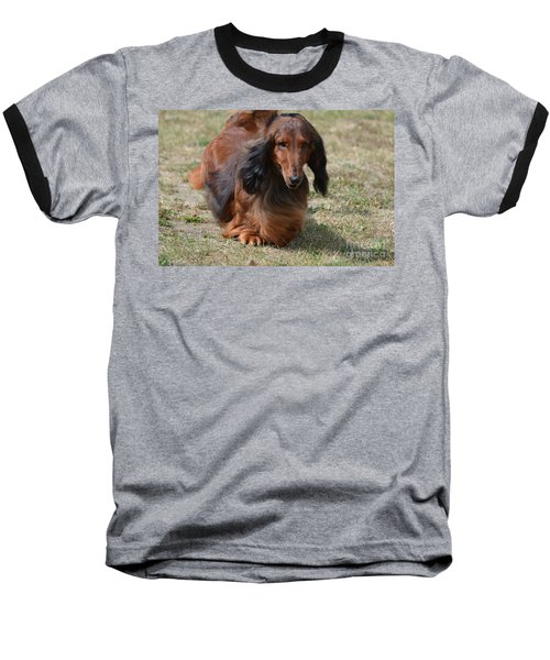 Adorable Long Haired Daschund Dog Baseball T-Shirt