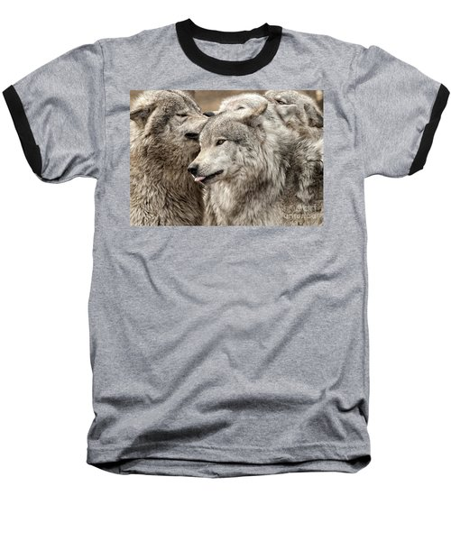 Baseball T-Shirt featuring the photograph Adult Timber Wolf by Wolves Only