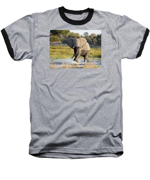 African Elephant Mock-charging Baseball T-Shirt