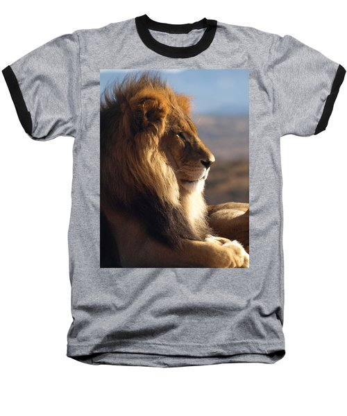 African Lion Baseball T-Shirt by James Peterson