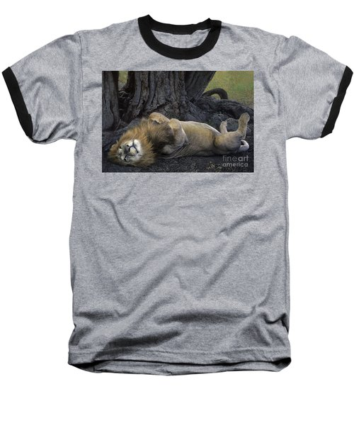 African Lion Panthera Leo Wild Kenya Baseball T-Shirt by Dave Welling