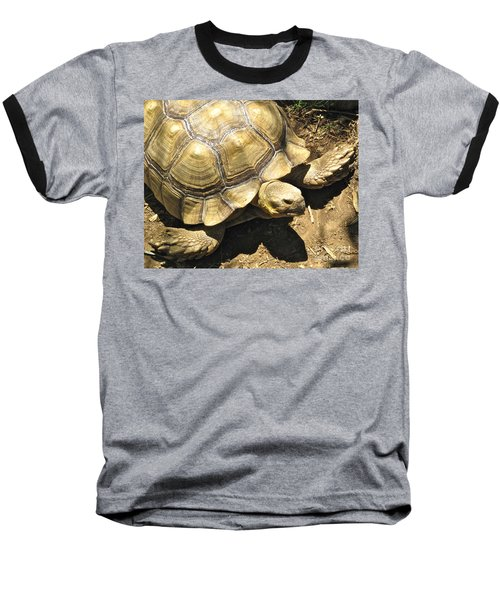 African Spurred Tortoise Baseball T-Shirt by CML Brown