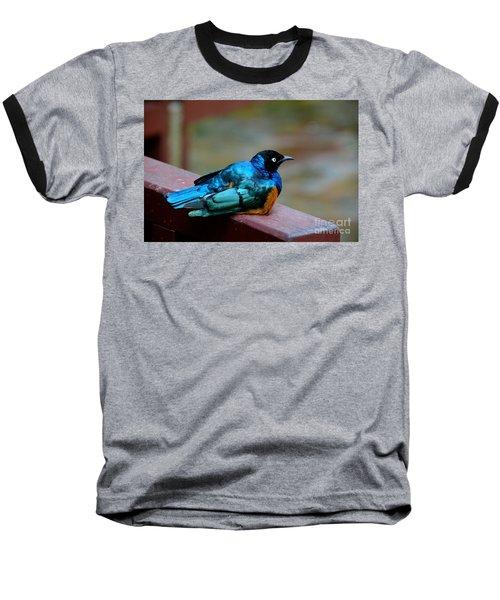 African Superb Starling Bird Rests On Wooden Beam Baseball T-Shirt