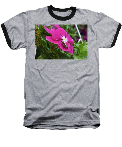 Baseball T-Shirt featuring the photograph Ailanthus Webworm Moth Visiting My Garden by Verana Stark