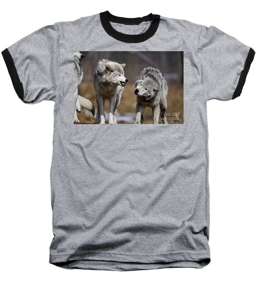 Baseball T-Shirt featuring the photograph Alpha Displeasure by Wolves Only