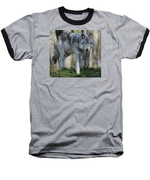 Alpha... Baseball T-Shirt by Nina Stavlund