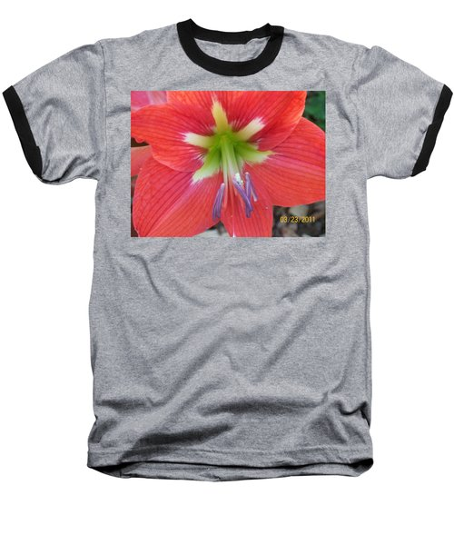 Baseball T-Shirt featuring the photograph Amarylis by Belinda Lee