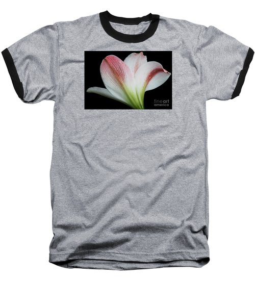 Amaryllis Baseball T-Shirt by Judy Whitton