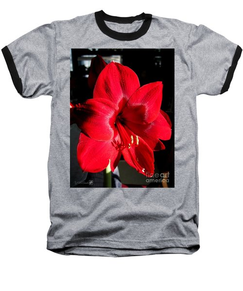 Baseball T-Shirt featuring the photograph Amaryllis Named Black Pearl by J McCombie