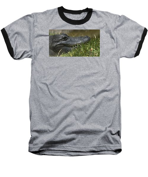 American Alligator Closeup Baseball T-Shirt by David Millenheft