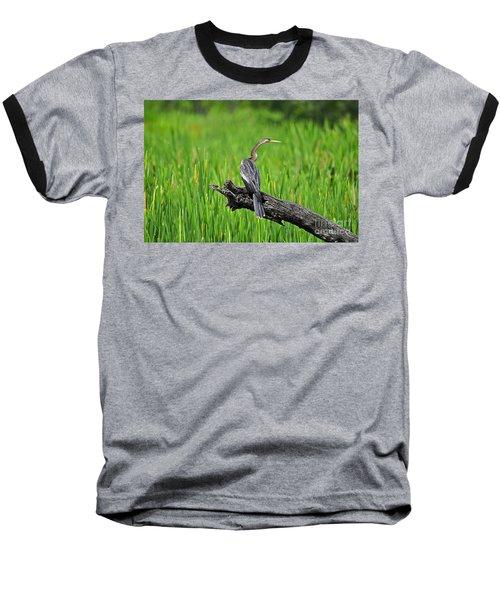 American Anhinga Baseball T-Shirt