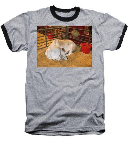 American Brahman Heifer Baseball T-Shirt by Connie Fox