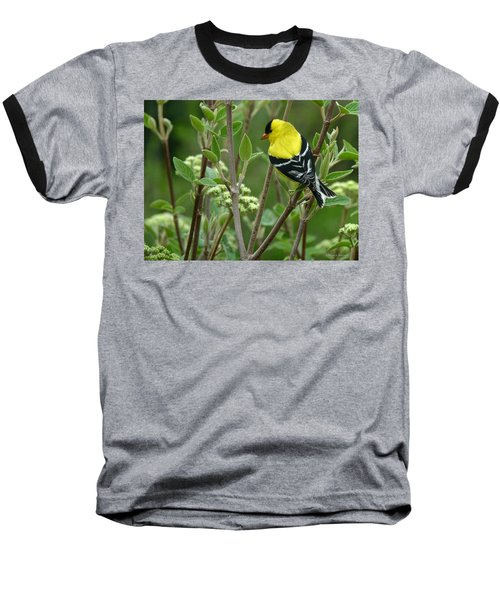 American Goldfinch Baseball T-Shirt