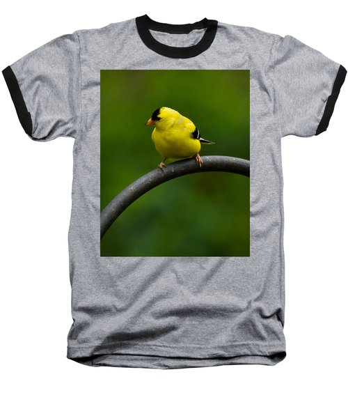 Baseball T-Shirt featuring the photograph American Goldfinch by Robert L Jackson