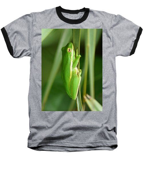 American Green Tree Frog Baseball T-Shirt by Kim Pate