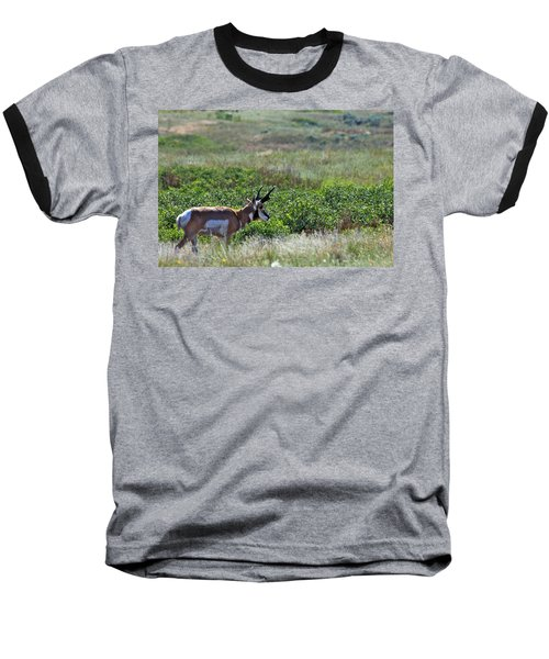 Baseball T-Shirt featuring the photograph American Pronghorn Buck by Karon Melillo DeVega