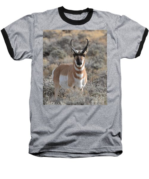 ...and The Antelope Play Baseball T-Shirt