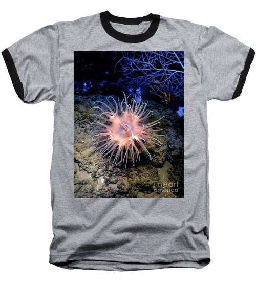 Baseball T-Shirt featuring the photograph Anemone Sea Life Sea Ocean Water Underwater by Paul Fearn