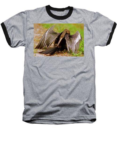 Anhinga Anhinga Anhinga Preening Baseball T-Shirt by Millard H. Sharp