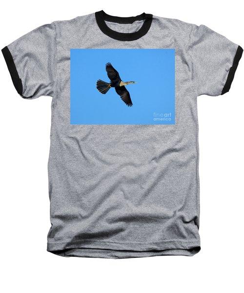 Anhinga Female Flying Baseball T-Shirt by Anthony Mercieca