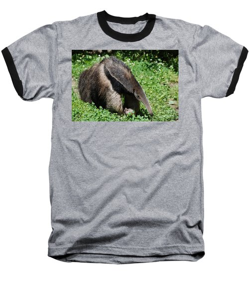 Anteater Baseball T-Shirt by DejaVu Designs