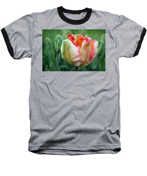Apricot Parrot Tulip Baseball T-Shirt by Joseph Skompski