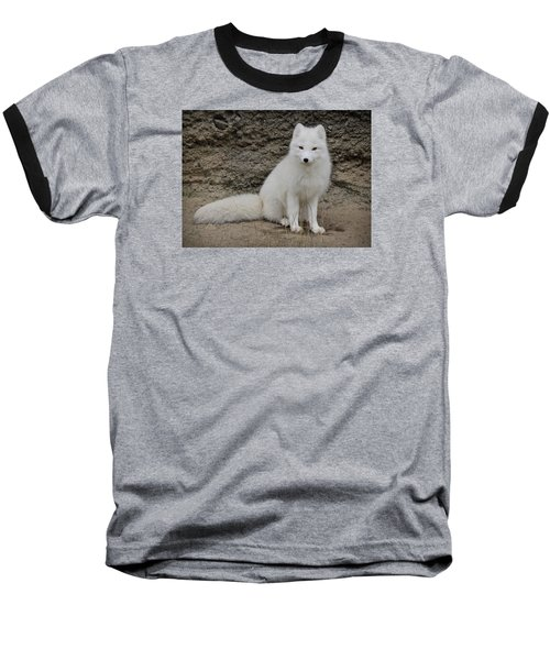 Arctic Fox Baseball T-Shirt by Athena Mckinzie