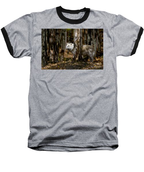 Baseball T-Shirt featuring the photograph Arctic Wolf In Forest by Wolves Only