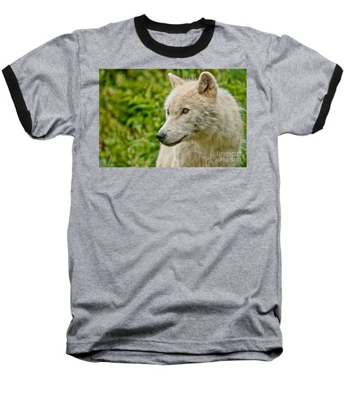 Arctic Wolf Pictures 241 Baseball T-Shirt