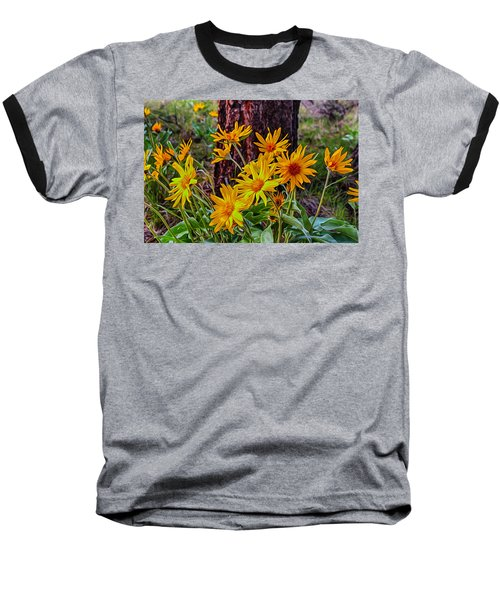 Arrowleaf Balsamroot Baseball T-Shirt