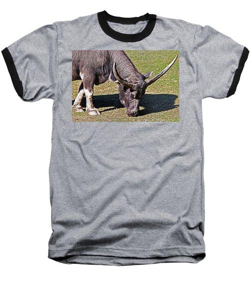 Asian Water Buffalo  Baseball T-Shirt