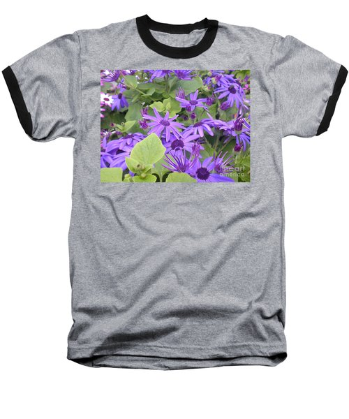 Asters Baseball T-Shirt by Kim Prowse