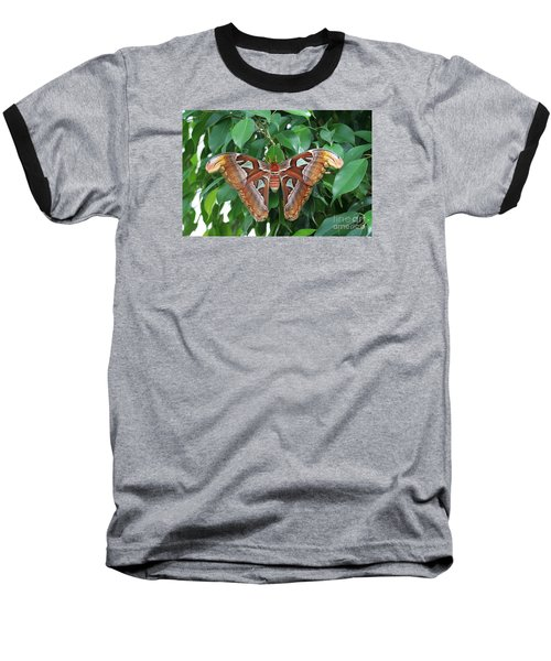 Baseball T-Shirt featuring the photograph Atlas Moth #2 by Judy Whitton