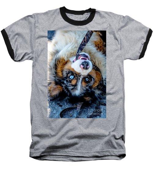 Australian Shepherd Baseball T-Shirt by Cheryl Baxter