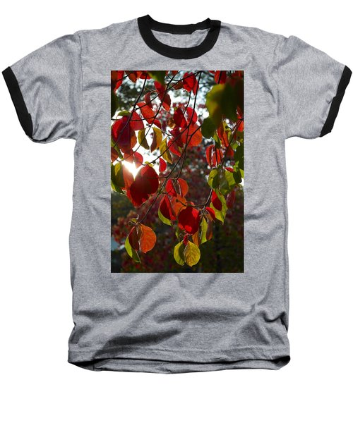 Autumn Dogwood In Evening Light Baseball T-Shirt
