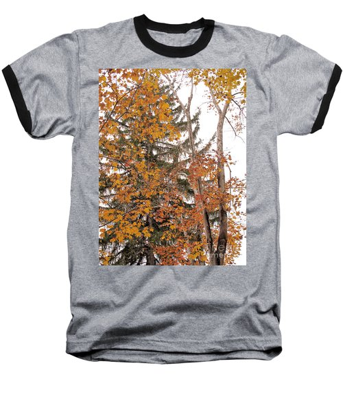 Baseball T-Shirt featuring the photograph Autumn Gold by Sandy McIntire
