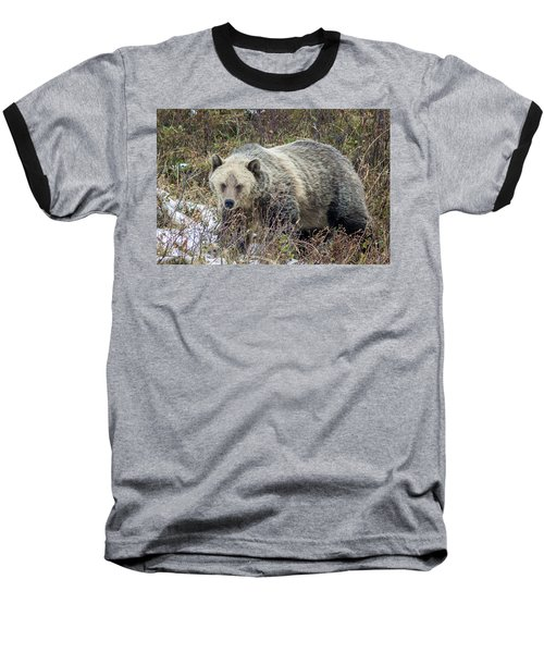 Baseball T-Shirt featuring the photograph Autumn Grizzly by Jack Bell