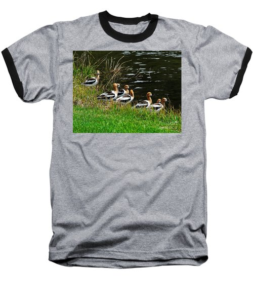 Baseball T-Shirt featuring the photograph Avocets by Sam Rosen