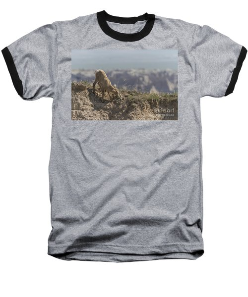 Baby Bighorn In The Badlands Baseball T-Shirt