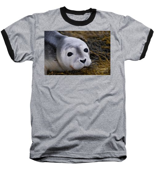 Baby Seal Baseball T-Shirt by DejaVu Designs